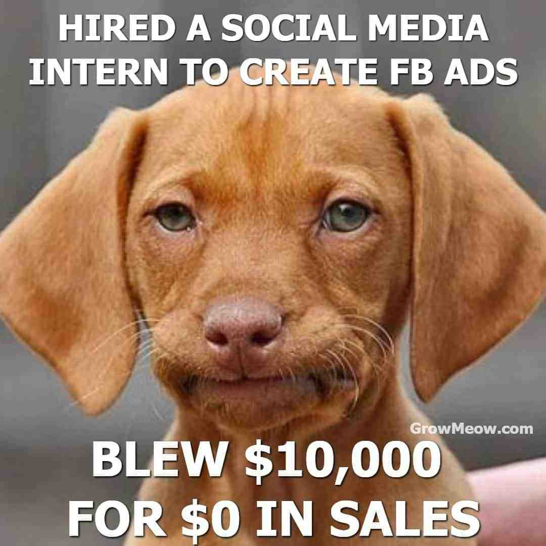 dog upset because you hired an intern for your advertising